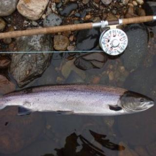 Salmon Fishing Scotland (158).JPG