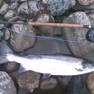 Salmon Fishing Scotland (161).jpg